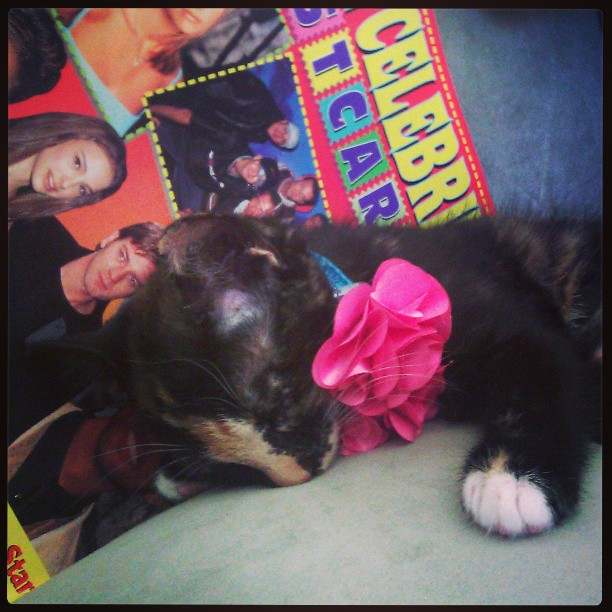 A small black kitten with white paws and cream stripe on her nose asleep on a green couch. She is wearing a pink flower on her collar and a 90s celebrity teen magazine is in the background.